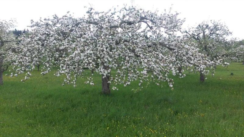 Baumwiese im Frühjahr